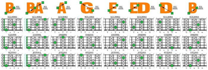 BLOGoZON No 481 - 5 string bass (BEADG - Low B) C major